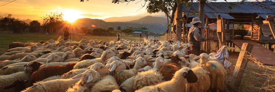 Образ пастиря