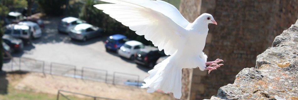 Дух Святий та Його дари