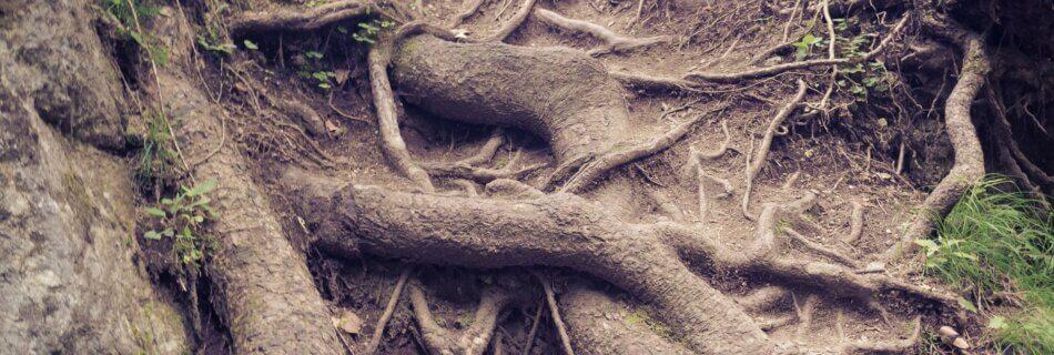 Глибоке коріння. Головне в житті – невидиме